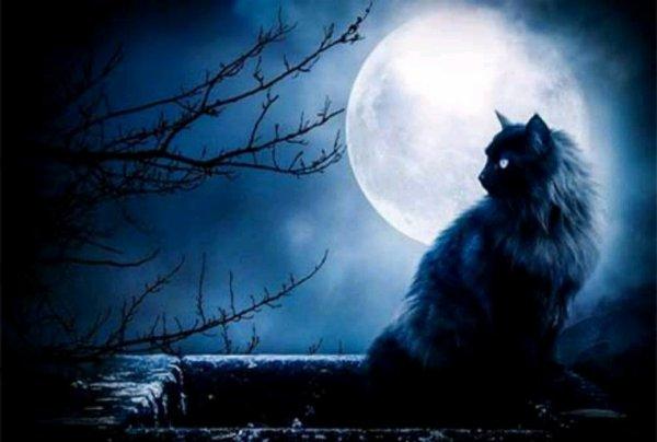 Quelques magnifique chats noirs!!^^