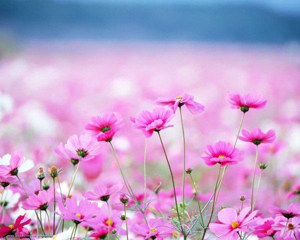 Parmi les hommes le plus faible, est celui qui ne sait pas garder un secret; Le plus fort, celui qui maîtrise sa colère;  Le plus patient, celui qui cache sa pauvreté;  Le plus riche, celui qui se contente de la part que Dieu lui a faite..!
