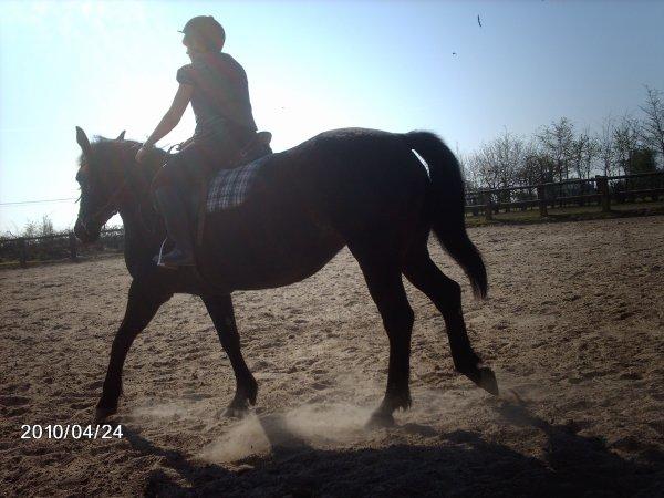 Tout homme à cheval a un pied dans la tombe ; Mais il n'est de paradis qu'à cheval !