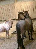 Photo de Queven-Equestre