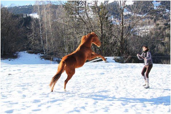 Ginger Pony !