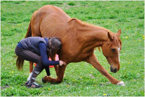 Petit poney deviendra grand !