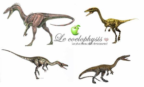 Mon dino préféré; le coelophysis ♥