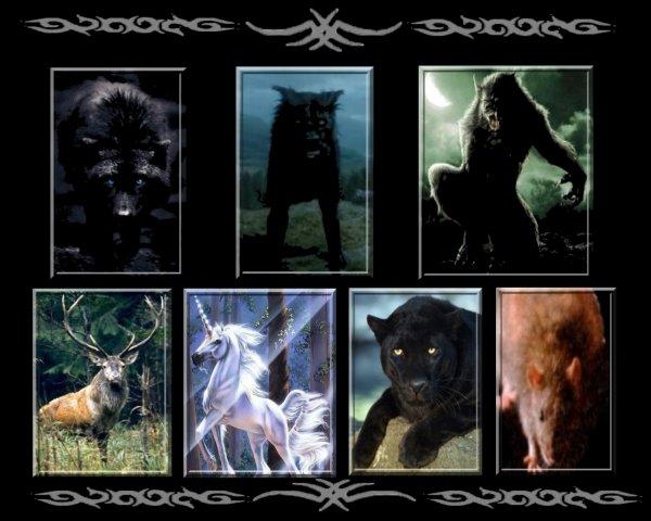 Chapitre 13 : Instinct animal