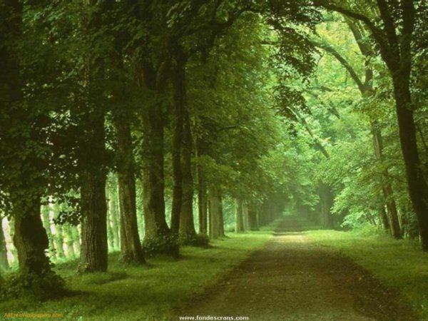 green road under the trees