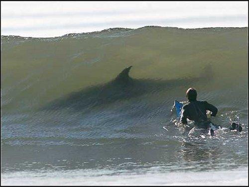 Demain je pars pour 3 semaines de sessions surf avec les requins à la Réunion !!! Yeahhhaaaaaa