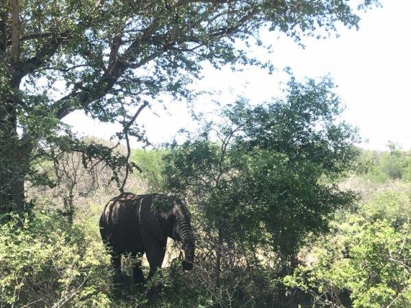 Au parc kruger, south africa