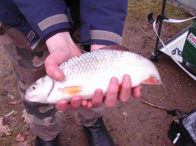 gros gardon petit pêcheur lol