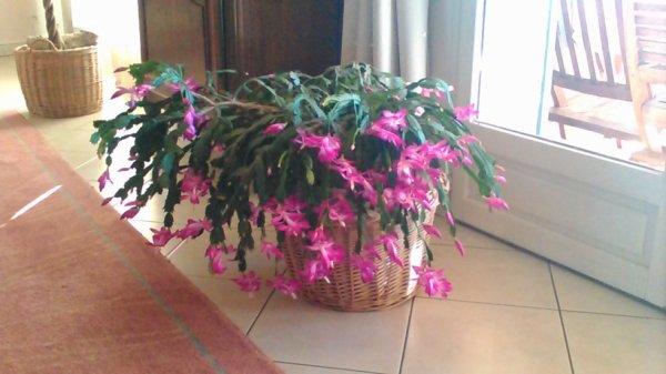 mes jolies fleurs fleuries