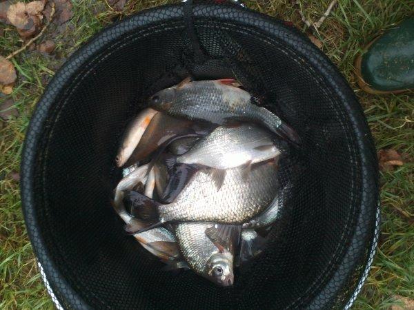 resultat entrainement 3kg de fish, gardons et plaquettes