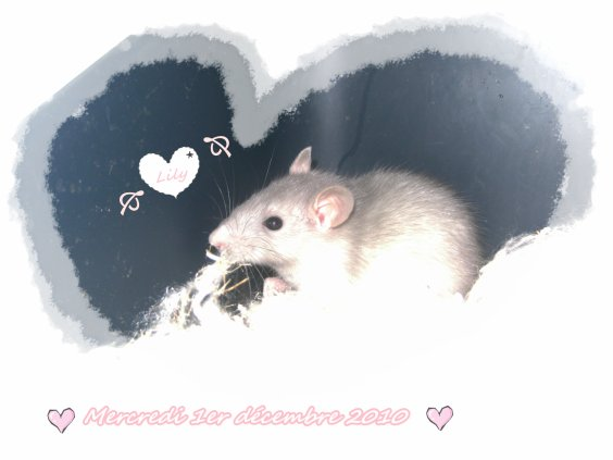 ♥ Lily ♥