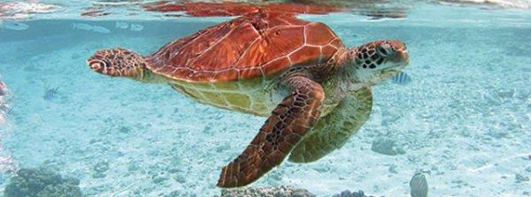 Découverte des tortues