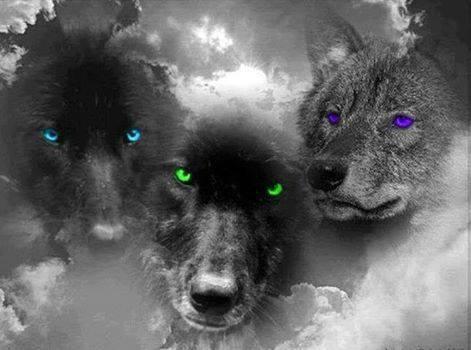 pris sur le blog de mon amie mariedauphin42 ( le texte avec la prière du loup )
