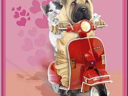Des jolies images et toujours  de l humour qui je pense n est pas mal trouver lol ! !