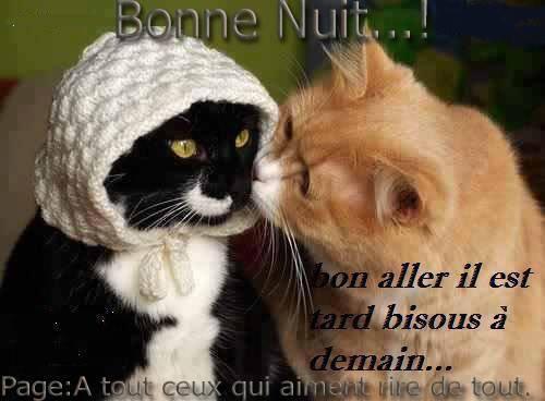 La prière du chat et une série de photos plutôt marrante lol ! !