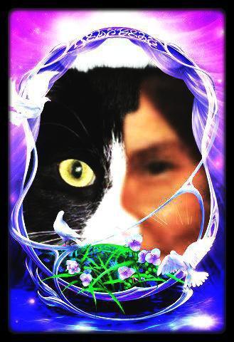Cadeau de mes amis revebleu & antoniocosta &  petitemamiedu13 + Divers images et une vidéo ( abandon des animaux) prise sur le blog de credence80100 ! !