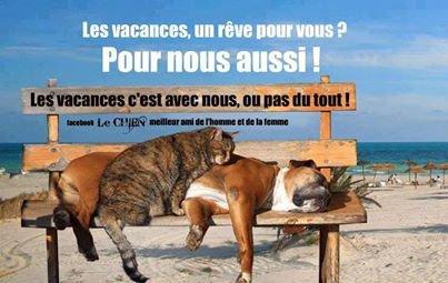 POUR MOI C EST VRAI ! !    ET POUR VOUS ? ?  + Divers images drôle lol ! !