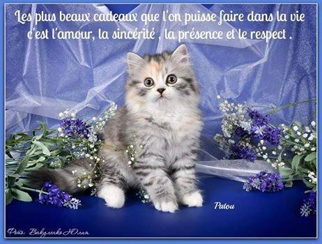 Bonjour...je vous souhaite une très bonne semaine .... et divers images images et un peu d humour ! !