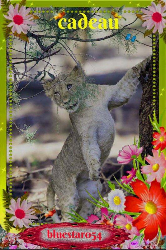 Merci pour ces jolis cadeaux  mes ami(e)s apash2010 / JeanFerrat86 /petitemamiedu13/ Diamant18/ Blanche628/ Valeriedu92