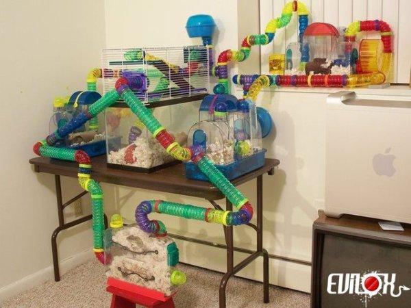maison de vacance speciale hamster
