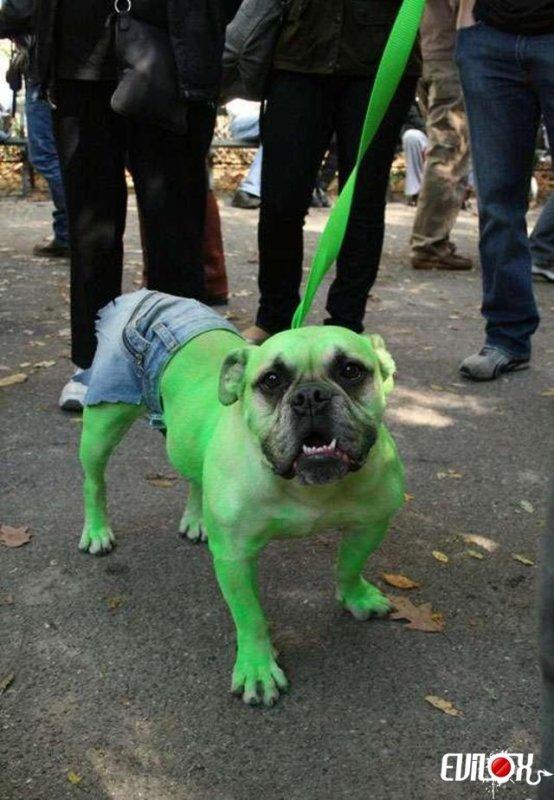 Hulk a un chien S'il est pas énervé c'est un chihuahua...