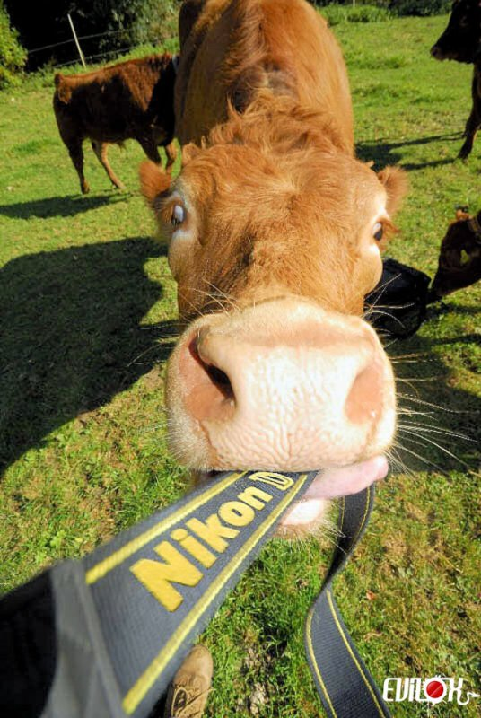 J'aime pas Nikon ! Personne ne me prend en photo avec un Nikon, bordel !
