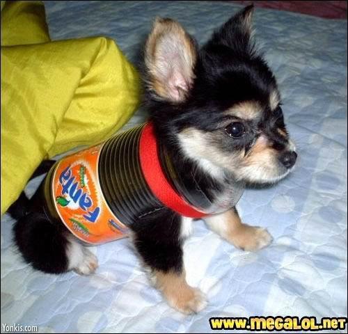 Sympa ton body ! Il pète, il rote, il pue l'orange, bref, on l'a appelé Fanta...