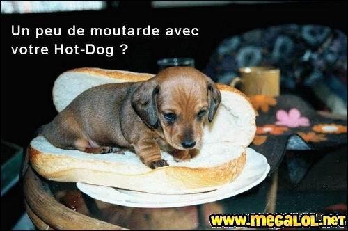 C'est mimi ! Comme il est mignon le tout piti ! Gouzi Gouzi.    Sympa sa couchette à ce petit chien, une couchette en forme de pain...    Allez zou, au micro-ondes !