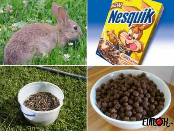 le sercet des cereales nesquik