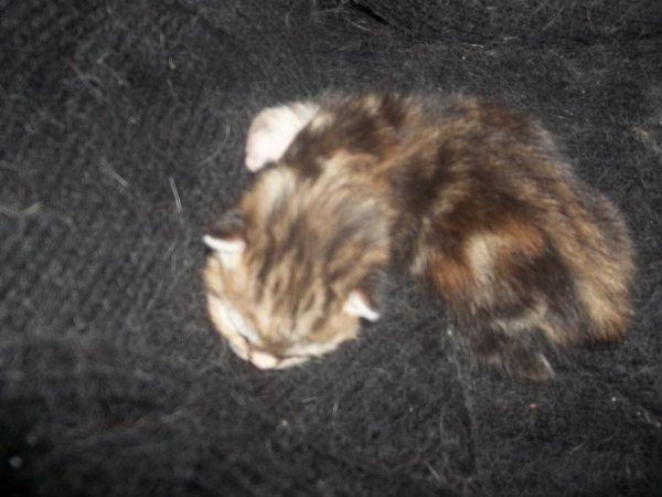 bonjour bon weeh  kend voici des photos des chatons agee de 3 jours