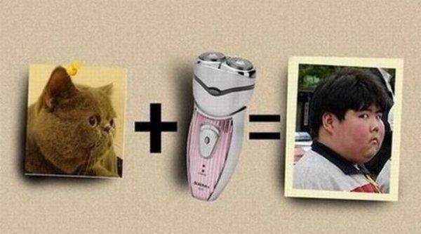 Qu'est ce que ça fait un chat + un rasoir ? Eh bien, image-drole.eu a trouvé pour vous la réponse, assez surprenante d'ailleurs ! Regardez par vous même, et appréciez ce pauvre garçon boursouflé…