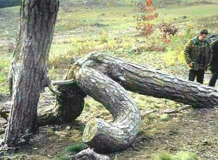 Qui a dit que les arbres ne faisaient pas l'amour ? Pour les incrédules, il y a ici un très bon exemple…