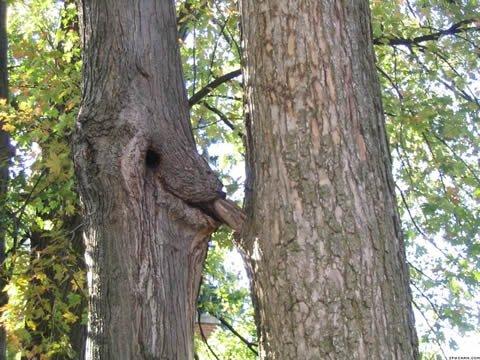 Vous n'avez surement jamais vu un arbre se faire sucer…