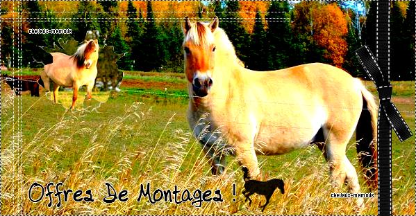 Offres De Montages !