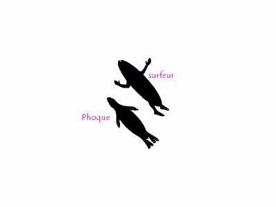 la nourriture prefere des requin  est le phoque !