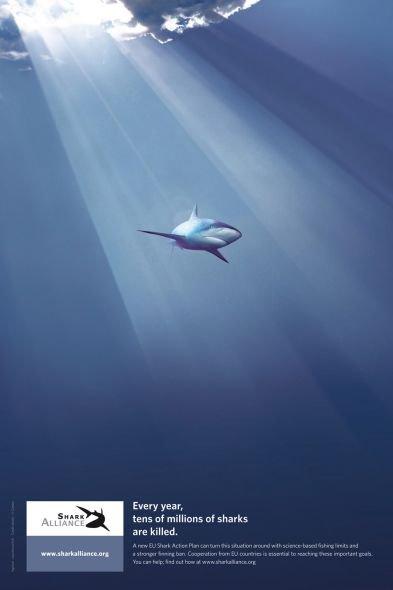 soutener shark alliance