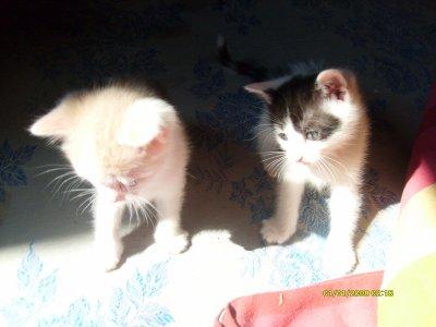 voilas mes chaton il sont nee le 6 juin 2011