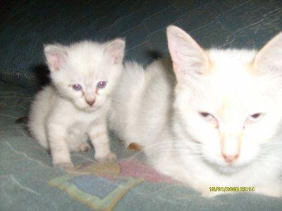 voilas mes chat et chaton