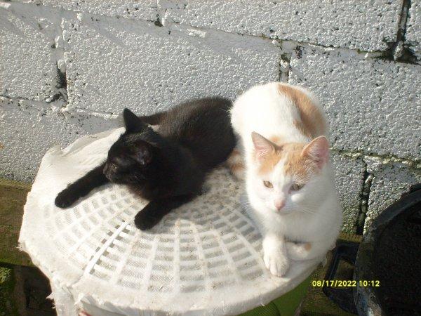 mes chat et chatton et mon chien