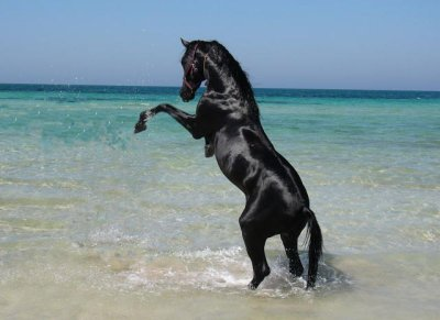 photo cheval et mer