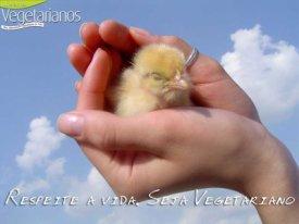 ser humano é ser amigo dos animais