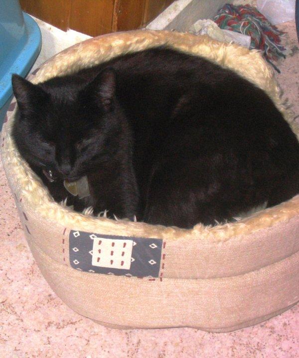 Hommage a un chat formidable qui nous a quitté bien trop tôt
