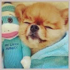 Hatchi, le chien de Zayn et Perry est trop mimi <3
