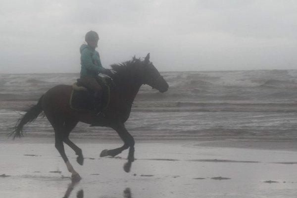 L'equitation : Le seul moyen de voler sans ailes ! <3
