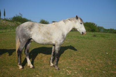 chevaux a vendre