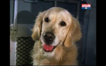 Gonzo(le chien de Ralf)