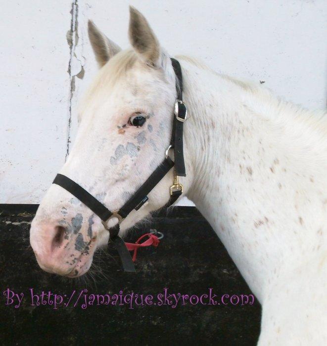 Le Haras, les amies, les chevaux... Une vie en or !!!!