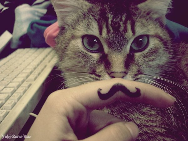 Swagg moustache