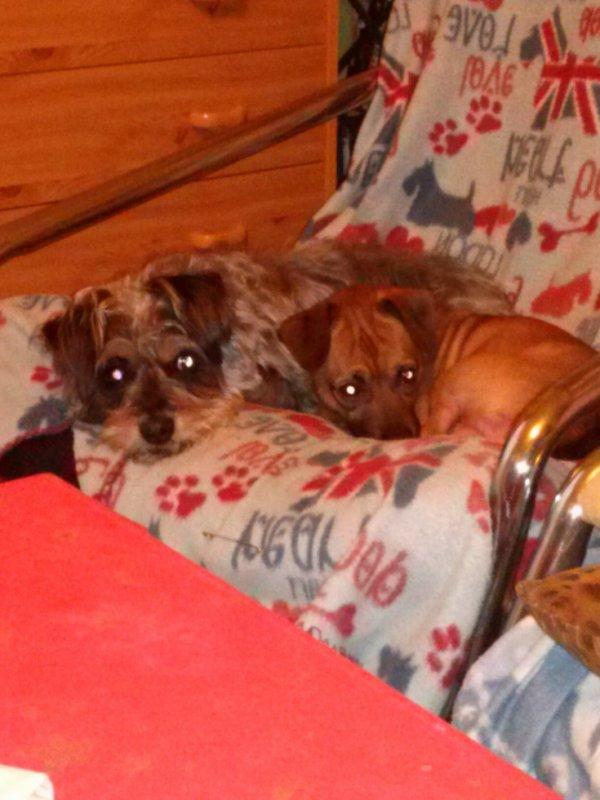 Filou et Toby