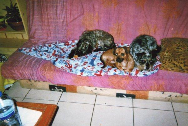 Filou, Toby et Pluto, la famille au complet